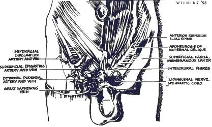 Publication Penile – 2